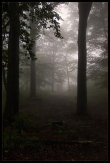 лес сна