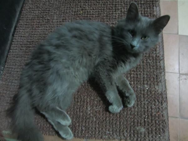 красавец-кот