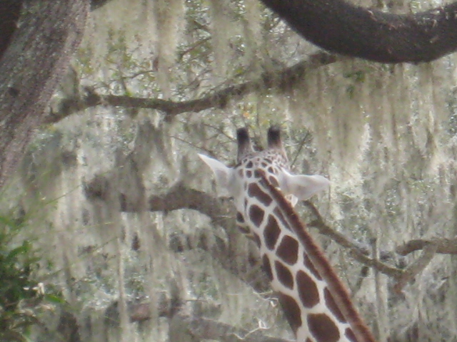 AnimalKingdom2012 003