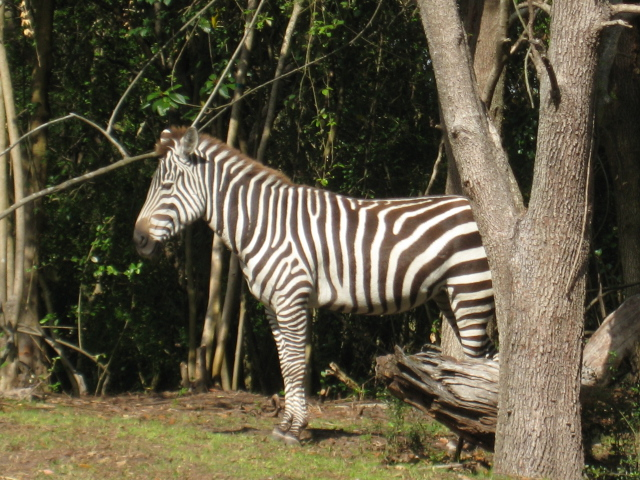 AnimalKingdom2012 007