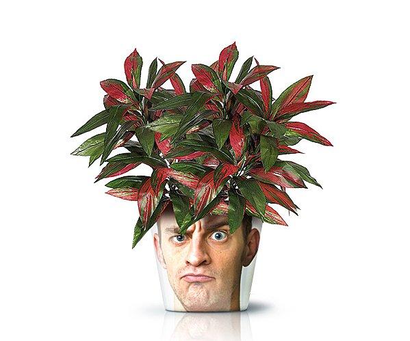 Какой цветок подарить мужчине в горшке