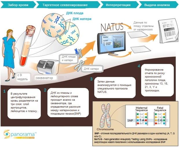 Panorama_Natus