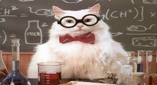 Когда научные статьи пишутся в соавторстве с котом