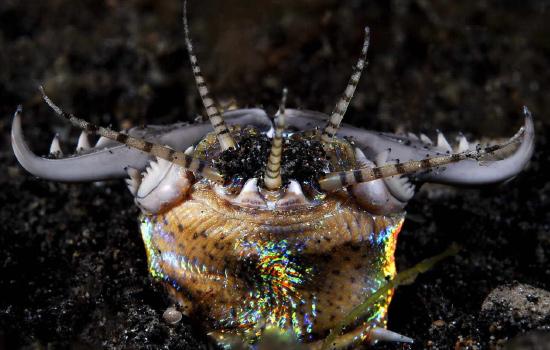 Червь Боббита - радужное чудовище из глубин