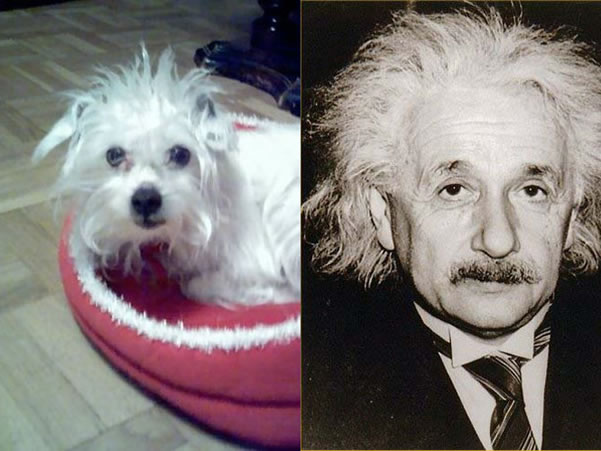 celebrity_dog_look-aike_7