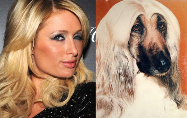 celebrity_dog_look-aike_3