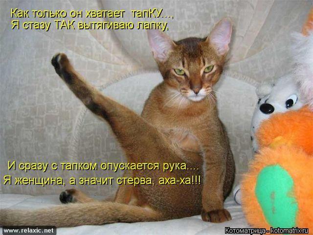 kotomatrix_000572