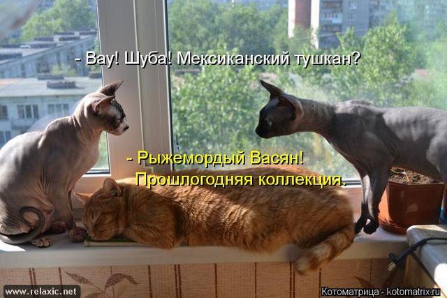 kotomatrix_000632