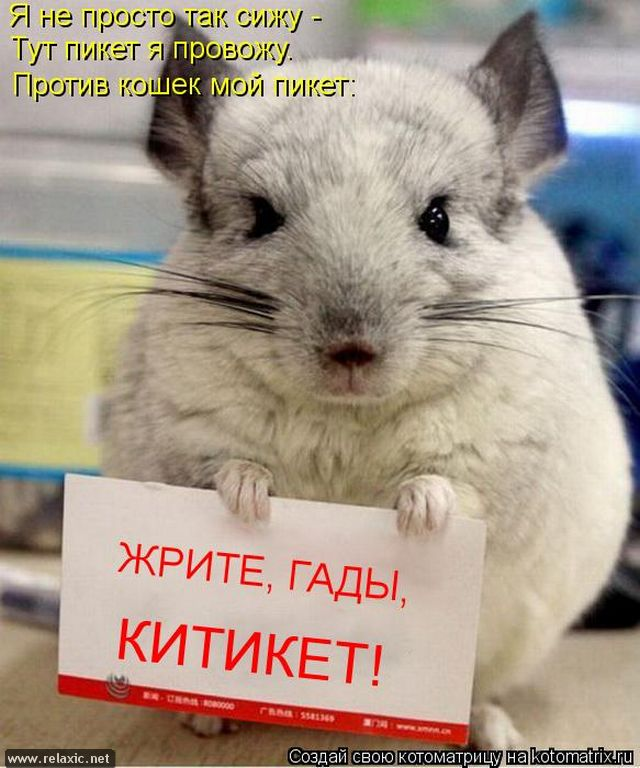 kotomatrix_000642