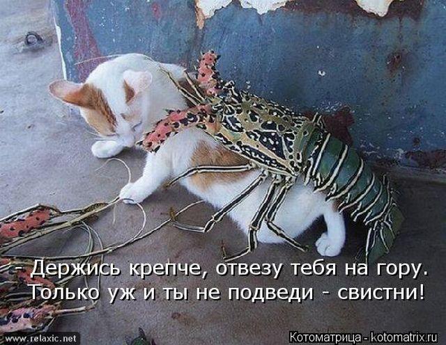 kotomatrix_000702