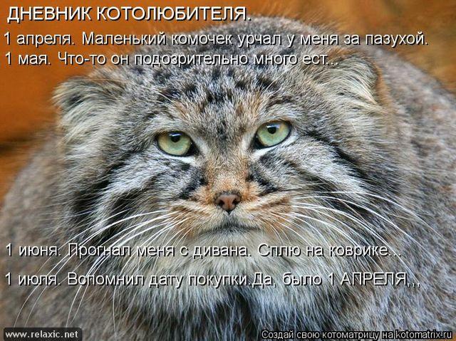 kotomatrix_00117