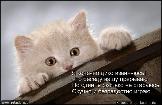 kotomatrix_00123