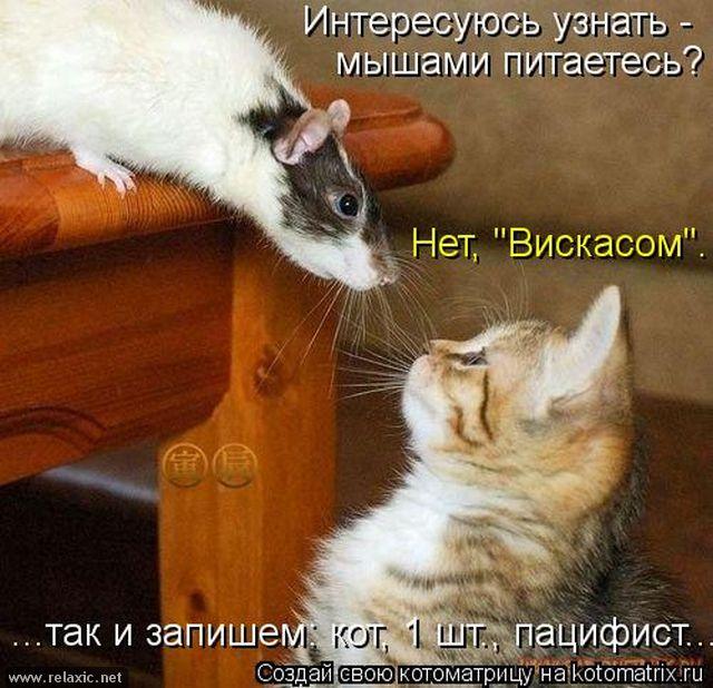 kotomatrix_000762