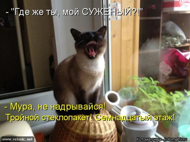 kotomatrix_000812