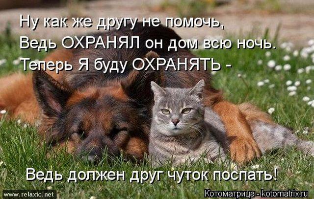 kotomatrix_000912