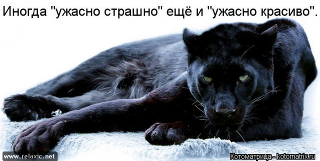 kotomatrix_000922