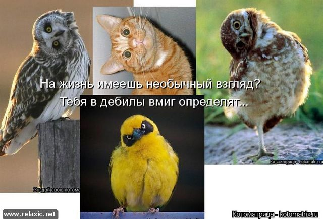 kotomatrix_000972