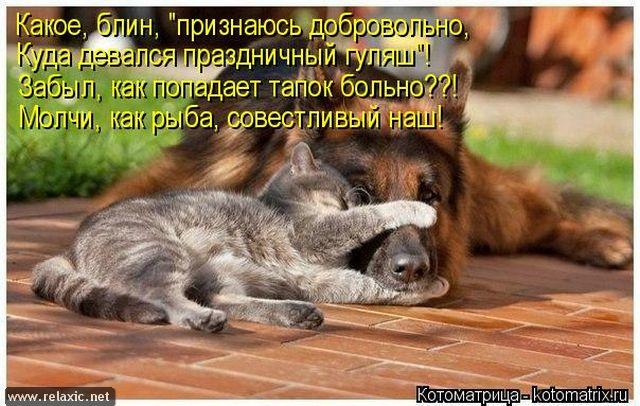 kotomatrix_000982