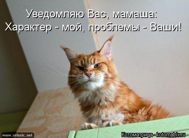 kotomatrix_001131