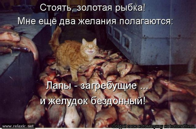 kotomatrix_001161