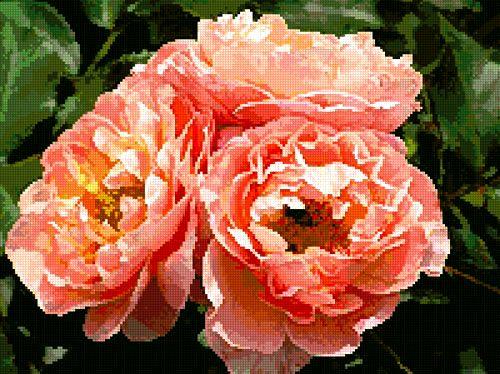 Apricot Roses (Вышивка крестиком)