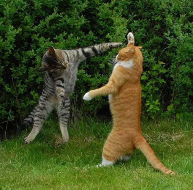 жуть натуральная это точно не про котов