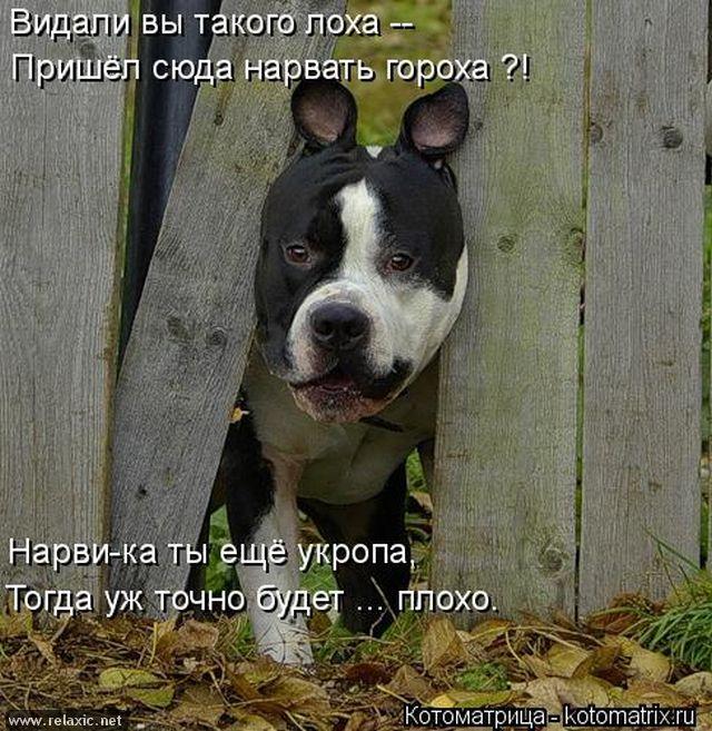 kotomatrix_000712