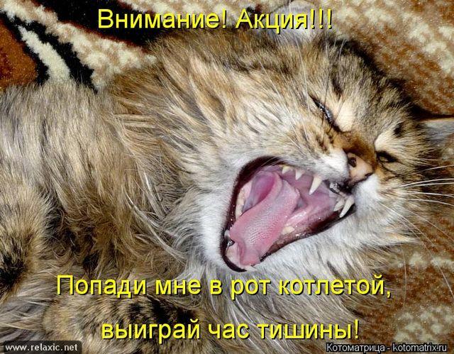 kotomatrix_000722