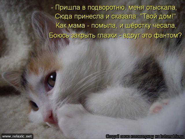 kotomatrix_000732