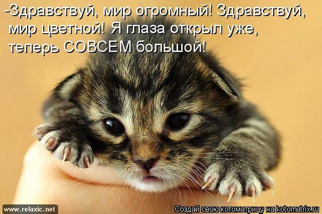 kotomatrix_000162