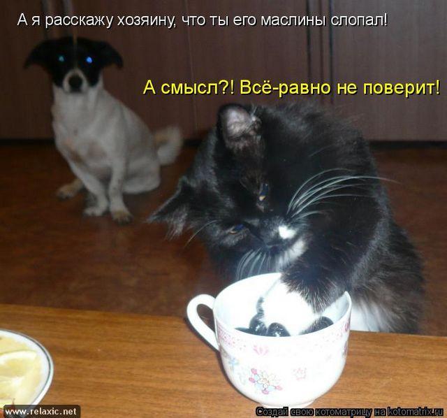 kotomatrix_000252