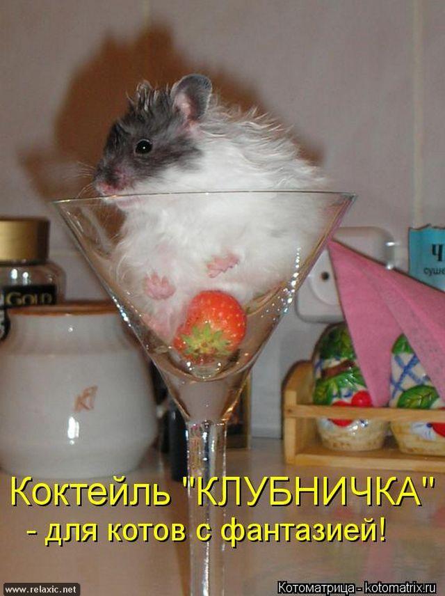 kotomatrix_000322