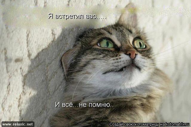 kotomatrix_000342