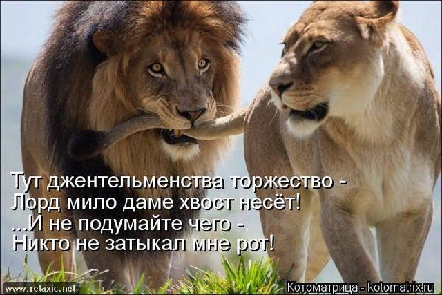 kotomatrix_000442