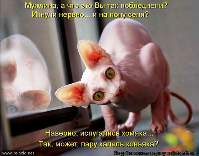 kotomatrix_000452