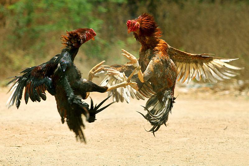 Жестокость - Животные и природа