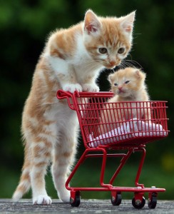 Cat-and-Kitten_532_1546451a
