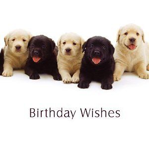 Birthday-Wishes-Yellow-and-Black-Labrador-Puppy-Dog-card-321127909056