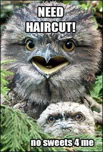mock owls