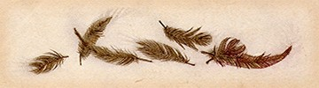 Ravens_chaphead_feathers