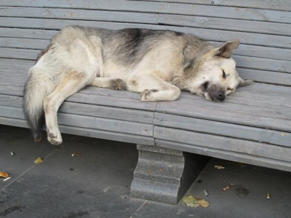 IMG_3099 - собако спит
