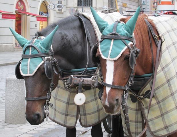 IMG_5862 — копия лошадки ушки