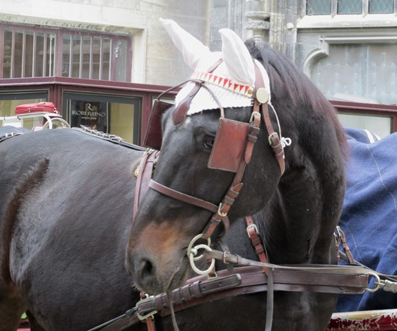 IMG_5864 — копия лошадка