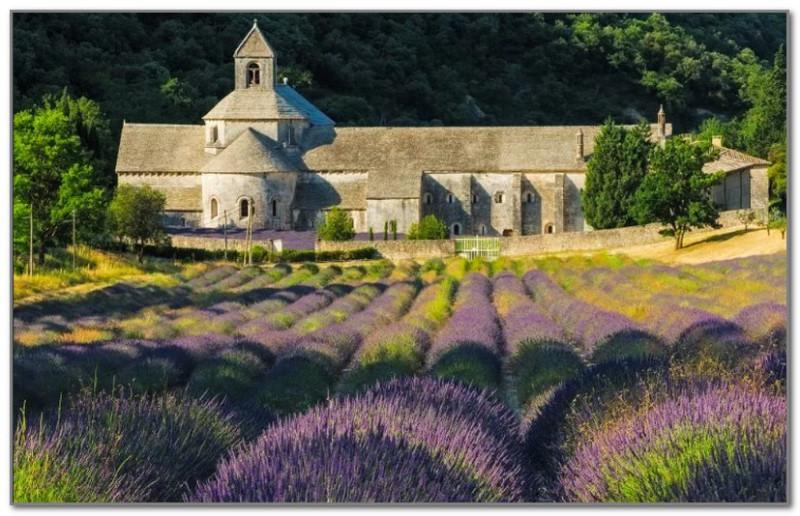 На заднем плане аббатство Сенанк. Один из самых знаменитых монастырей Франции и одна из самых главных достопримечательностей Прованса