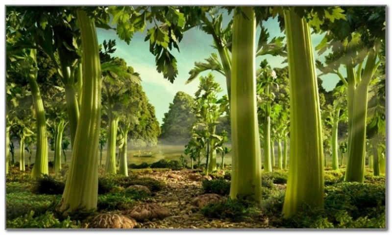 Лес из сельдерея