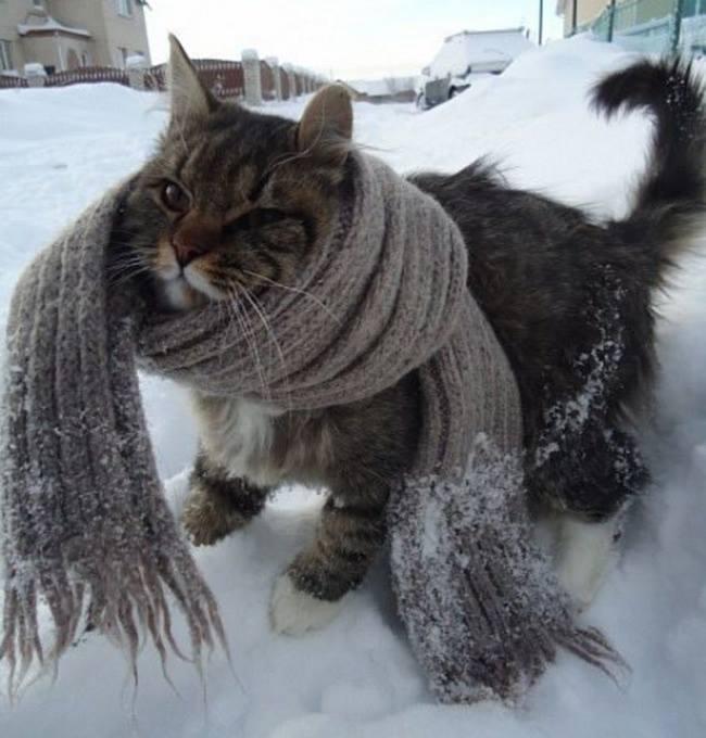доброта-зима-согрей-животных-кот-1721727