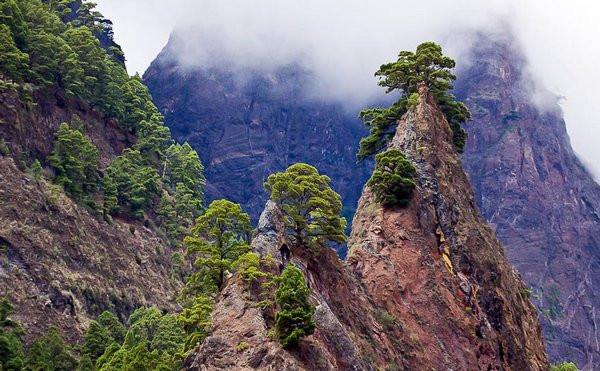 1=ГОРЫ и СОСНЫ = пики на фоне большой горы