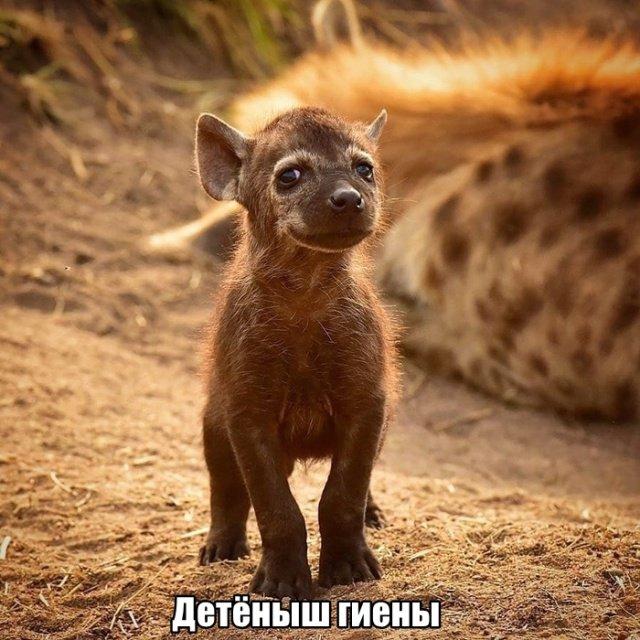 fotopodborka_subboty_80_foto_13.jpg