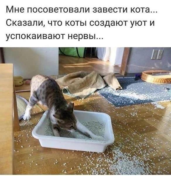 1554205036_prikol-6.jpg