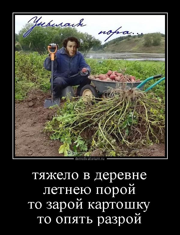 tjajelo_v_derevneletneu_porojto_zaroj_kartoshkuto_opjat_razroj_178693.jpg